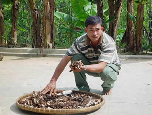 Nguyễn Đình Hoa bán nấm lim xanh có thực sự chất lượng