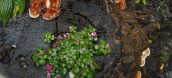 Giải đáp thắc mắc nấm lim có độc không