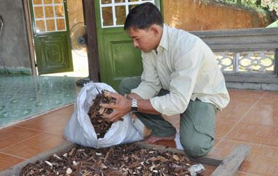 Nấm lim xanh Nguyễn Đình Hoa cung cấp sản phẩm có nguồn gốc rõ ràng