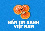 Nấm Lim Xanh Việt Nam