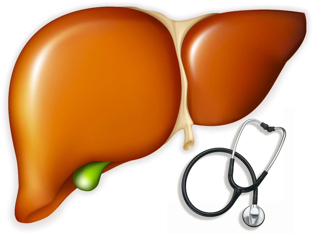 Sử dụng nấm lim xanh hỗ trợ làm hết bệnh gan